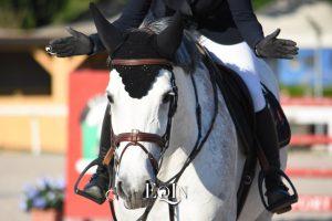 Apprendimento nel cavallo, quali rinforzi dare? Tutto dipende dalla sua personalità
