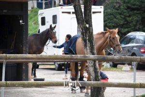 Trasporto del cavallo senza stress: alcuni elementi da considerare