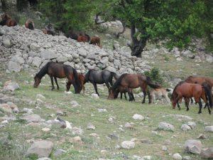 Horse Angels Onlus in Turchia: focus su protezione animale e ambientale