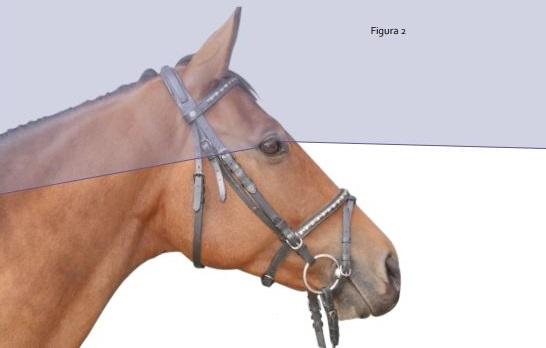 Che cosa sappiamo della vista del cavallo alcune - Avere un cavallo ...