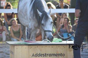 Addestramento Etologico torna a FieraCavalli – Verona 2017