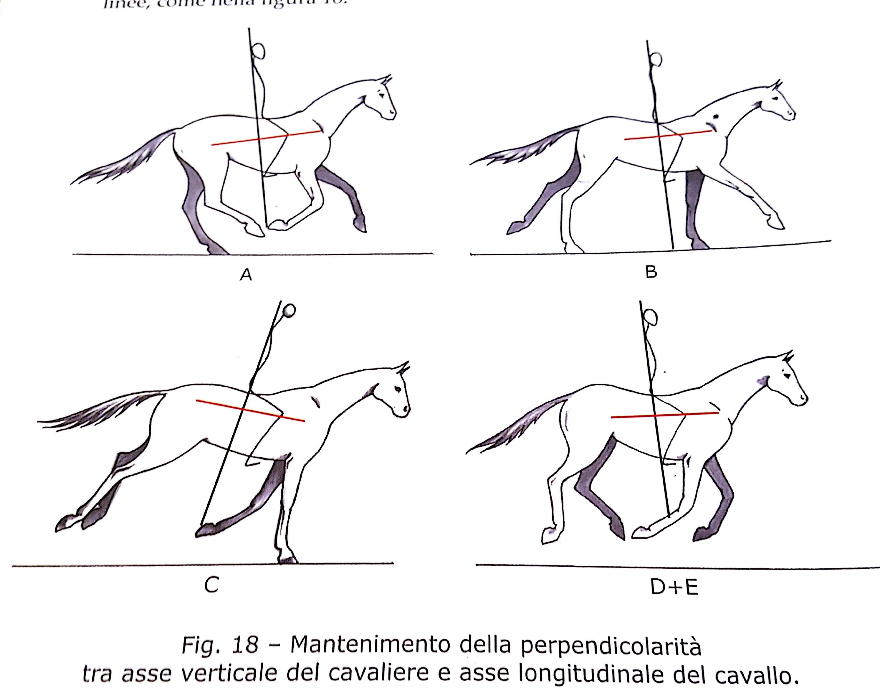 Il galoppo una successione di tre balzi con equitare for Casa progetta il trotto del cane