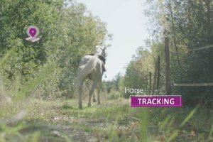 La rivoluzione francese per la sicurezza di cavallo e cavaliere: in arrivo EquiSure™
