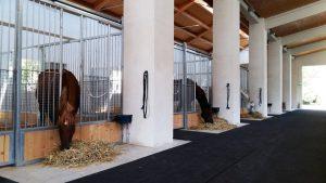 Un nuovo modo di pensare i centri equestri: Oq Horses, soluzioni etologiche