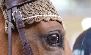 Lo stress del cavallo in un battito di ciglia