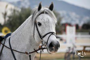 La Federazione: il cavallo atleta dovrà essere non DPA