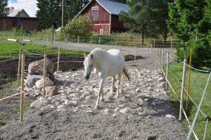 Paddock Paradise, dove il cavallo ha tutta la possibilità di espressione dei suoi comportamenti naturali