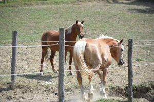 Ogni cavallo risolve le difficoltà a modo suo
