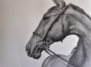 Alla scoperta dei cavalli ritratti dall'artista Dino Rinaldi