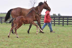 Puledri purosangue: sull'addestramento di base a partire dalle 3 settimane di età