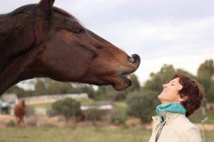 Flehmen nel cavallo: ma conosciamo il significato di questa buffa smorfia?