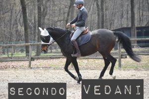 Gestire in sella gli stimoli esterni che generano paura o distrazione nel cavallo | Secondo Vedani (audio)