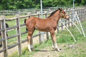 Salute dei cavalli: fronteggiare la dermatite estiva recidivante (D.E.R.)