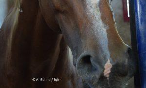 Un cavallo che sta bene… sbuffa!