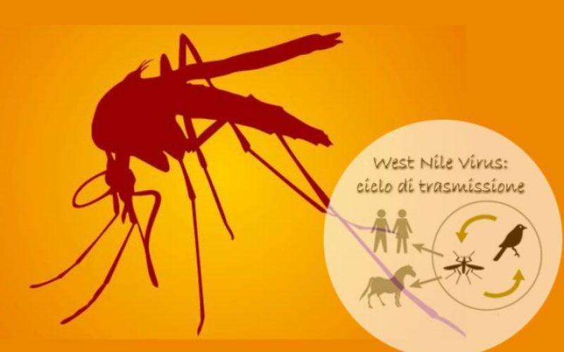 West Nile virus accertato anche in Piemonte