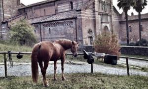 Equiturismo: tutti in sella alla scoperta di Langhe e Monferrato