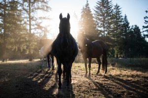 Carcassa di un cavallo a cielo aperto in provincia di Frosinone. E negli USA un cavallo chiede risarcimento al proprietario